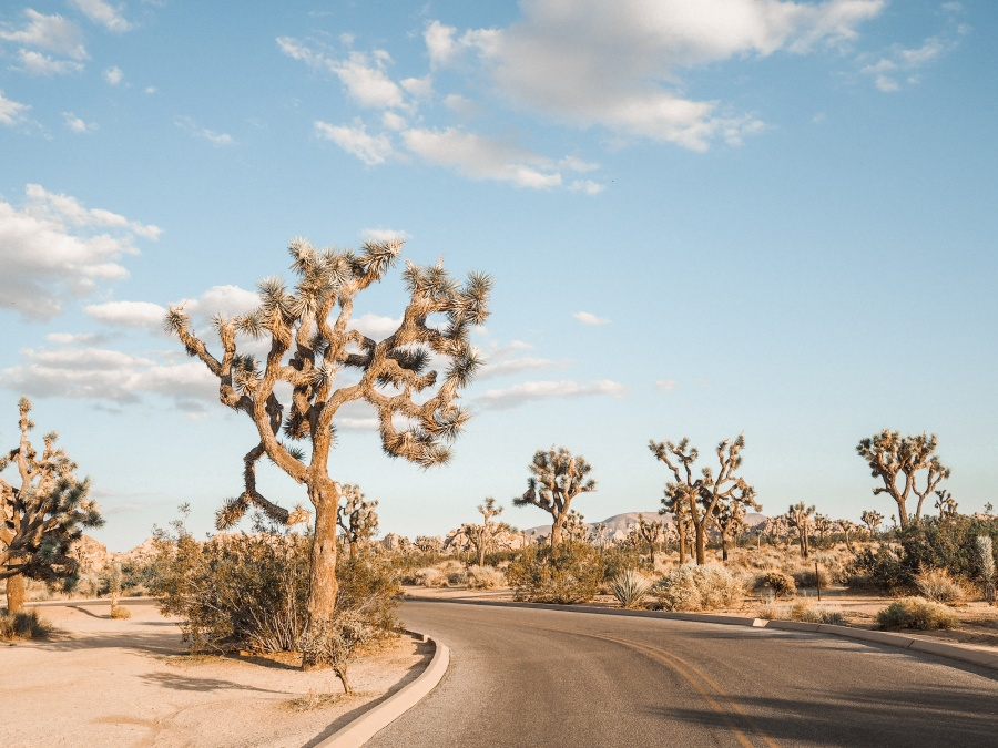 Joshua Tree National Park american road trip
