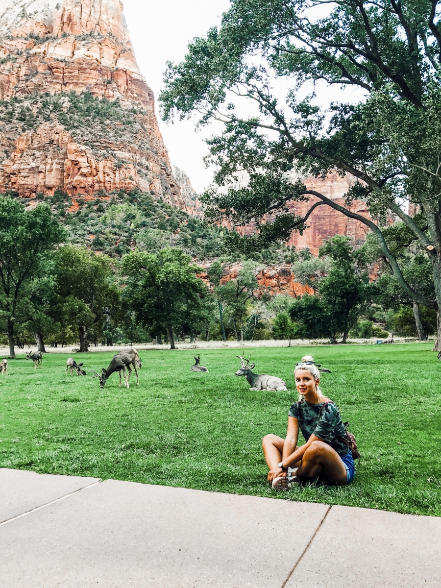 Zion National Park american road trip